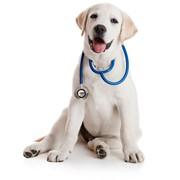 Ветеринарная медицина ЦЕНА ЛЬВОВ УКРАИНА фото