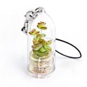 Тюльпан (ден. дерево) Minicactus брелок с живым растением фото