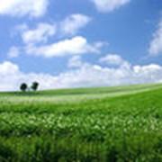 Экологический контрь фото