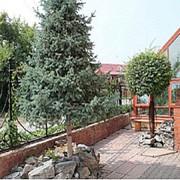Озеленение Территории,Благоустройство,Ландшафтный Дизайн От Агроном,То (г.Новосибирск) фото