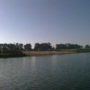 Рыболовство на платном частном ставу, Житомирская область с Вертокиевка. фото