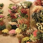 Цветы искусственные. Купить. Чигирин. фото