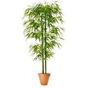 Искусственное растение Сочный бамбук фото