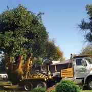 Посадка деревьев и кустарников, посадка деревьев, посадка крупномерных деревьев, посадка деревьев, осенняя посадка деревьев, посадка деревьев осенью. фото