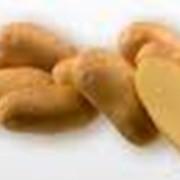 Семенной картофель (Германия) фото