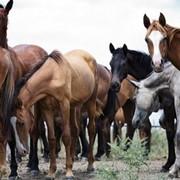 Оборудование от производителя для кормления лошадей фото