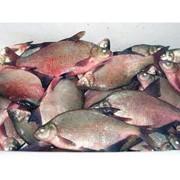 Рыба охложденная выловленна с арендовоных нами водоемов. Лещ разного калибра фото