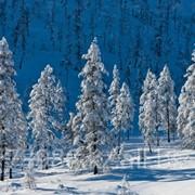 Зимний отдыx, база Зиновъевка фото