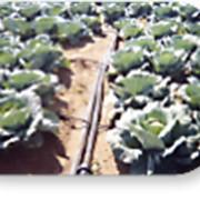 Орошение овощных культур открытого грунта фото