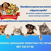 Перевозка домашних животных по Украине фото