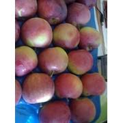Поставка фруктов, продажа, Россия, Казахстан фото