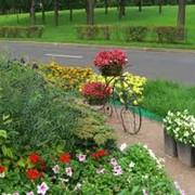 Озеленение территорий, ландшафтный дизайн, благоустройство участков фото