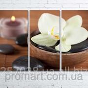 Модульна картина на полотні Біла орхідея код КМ80120-098 фото