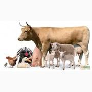 Кальциевая добавка к кормам животным(мел кормовой) фотография