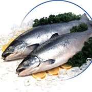 Хребты лосося св. мороженные фото