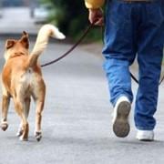 Выгул собак в Одессе фото