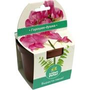 Горошек-душка Happy Plant наборы для выращивания фото