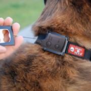 Системы наблюдения за животными фото