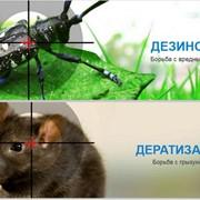Дератизация.Дезинфекция. Дезинсекция.Уничтожение крыс,мышей,тараканов фото