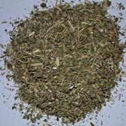 Люцерна трава продаю фото