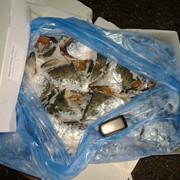 Головы лосося фото