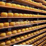 Сыр твердый Радамер 45% купить в Киеве фото