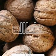 Орехи грецкие продам оптом Украина фото