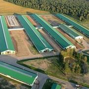 Проектирование агропромышленных комплексов фото