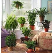 Уход за комнатными растениями фото