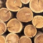 Реализация сырья древесины фото