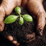 Удобрения органические фото