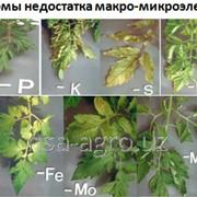 Листовая обработка для помидор Aminocat 30 фото