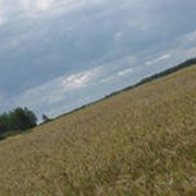Продажа земель скосельхозяйственного назначения больших площадей фото