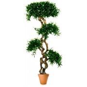 Искусственное растение Шапка за шапкой фото