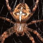 Как уничтожить пауков, комаров? Николаев.