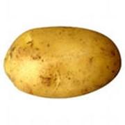 Картофель посадочный фото
