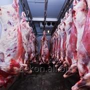 Мясо говядины II категории в четвертинах коровы замороженное фото