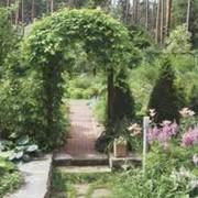 Ландшафтный дизайн сада. фото