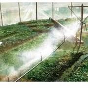 Системы полива для промышленных и фермерских теплиц фото