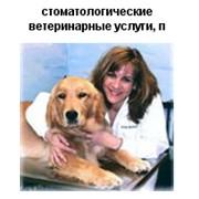 Все виды стоматологической помощи. фото