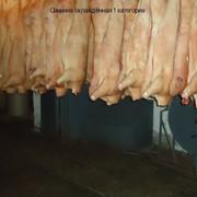 Свинина охлажденная 2 категории фото