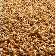 Сушка при влажности зерна свыше 19,1% за каждый тонно-процент снятия влажности (овёс, рожь, ячмень) фото