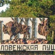Беловежская Пуща фото