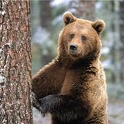 Охота на бурого медведя фото