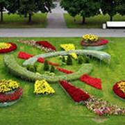 Научные основы декоративного садоводства и озеленения; фото