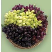 Виноград декоративный фото