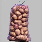 """Картофель продовольственный """"Скарб"""" фото"""