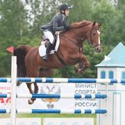 Лошадь саксонской породы фото