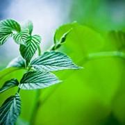 Инвентаризация источников выбросов вредных веществ в атмосферу фото