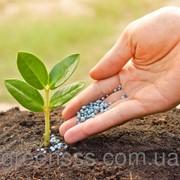 Внесение удобрений под некрупные растения фото